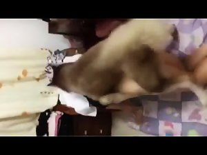 chinese girl dog fuck